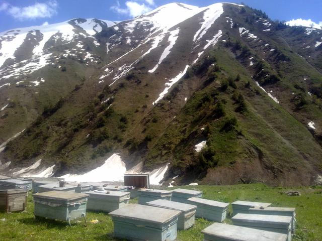 О горном меде: альпийский из липы, полезные свойства и применение