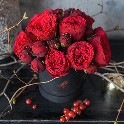 О розе piano: описание и характеристики сортов кустовой розы, уход и выращивание