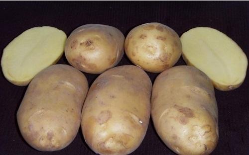 Лучшие сорта картофеля для пермского края, урала: описание, сравнение