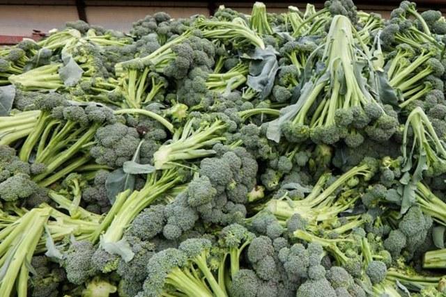 О выращивании и уходе за брокколи в открытом грунте, как выращивать