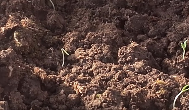 О посеве томатов на рассаду: когда сажать семена помидор, высадка в марте