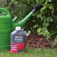 О розе джаз (jazz): описание и характеристики сорта плетистых почвопокровных роз