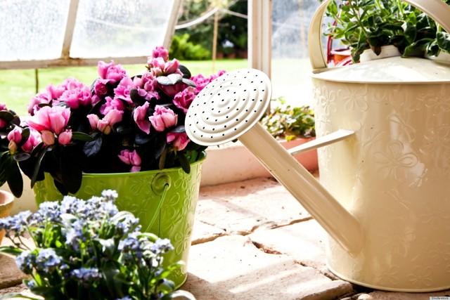 О подкормке цветов для обильного цветения в саду на клумбе летом: чем удобрять