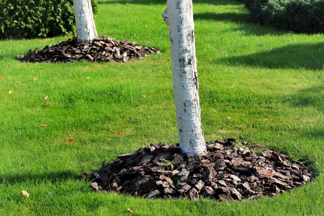 О клумбе без сорняков: как сделать цветник без прополки и окучивания