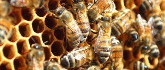 О кормушке для пчел из пластиковой бутылки своими руками, внутриульевая, чертежи
