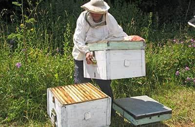 О пчелах в августе: пчеловодство, уход за пчелами, лечение, что делать на пасеке