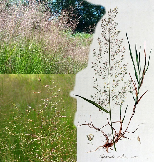 О луговых травах: названия, разновидности, как выглядят, описание растений