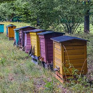 О пчеловодстве для начинающих: с чего начать, как завести пчел с нуля без опыта