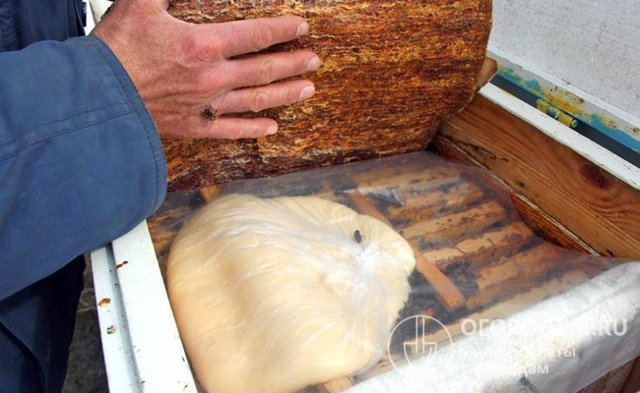 О подкормке пчел: как скормить пчелам прошлогодний мед, хвойный экстракт