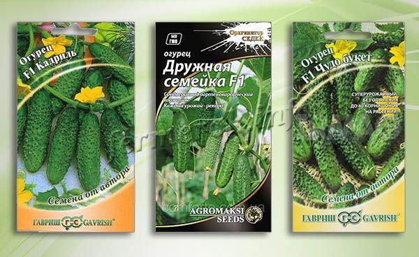 О том, когда сажают в сибири огурцы на рассаду: сроки посадки, как сеять