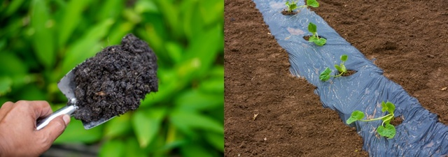 О сроках посадки тыквы в открытый грунт: когда можно сажать весной