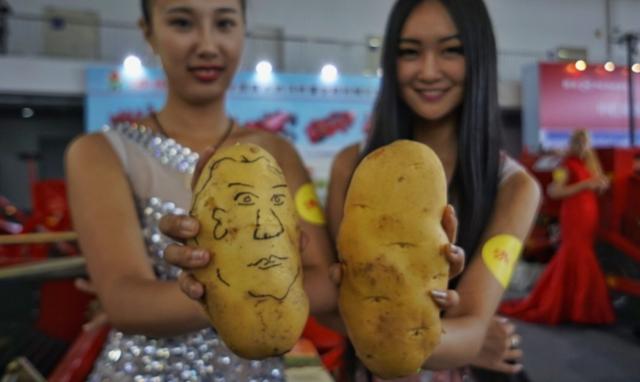 Китайский метод посадки и выращивания картофеля: технологии, советы