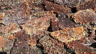 О перге пчелиной: что это, продукты пчеловодства, как выглядит, срок годности