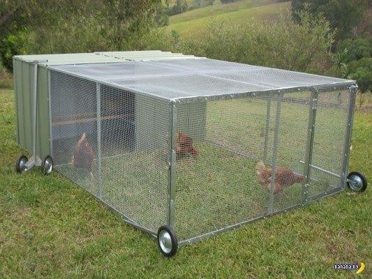 О загоне для цыплят своими руками: как сделать вольер, курятник, загородку