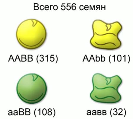 О персике: описание и характеристика, сравнение, скрещивание, гибриды