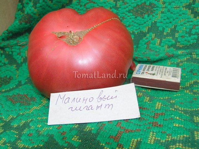 Малиновый гигант: описание сорта томата, характеристики помидоров, посев