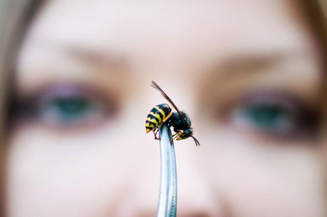 О пчелином гнезде: как избавиться от пчелиного гнезда на даче, как убрать дома