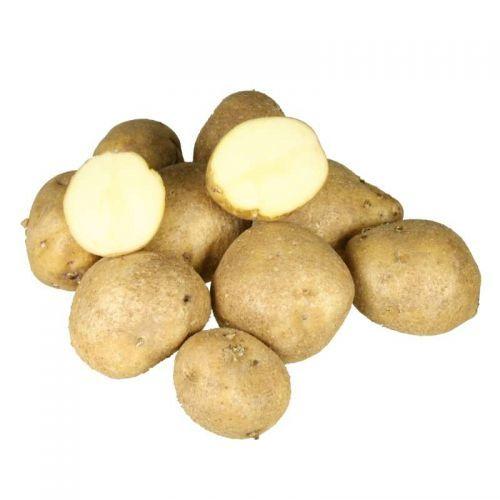 Кумач: описание семенного сорта картофеля, характеристики, агротехника