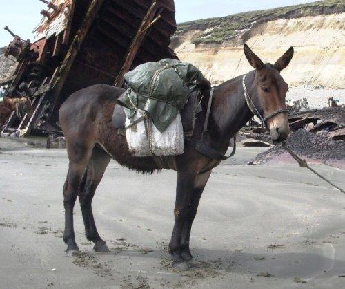О гибридах ослицы и жеребца, зебры и коня: результаты скрещивание лошадей с другими животными