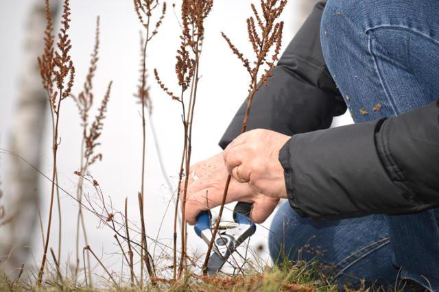 О посадке и уходе за астильбой в открытом грунте (когда сажать, как ухаживать)