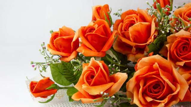 О правилах посадки роз весной: когда и как сажать розы в открытый грунт