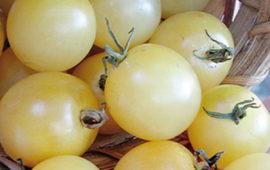 Король ранних: описание сорта томата, характеристики помидоров, посев