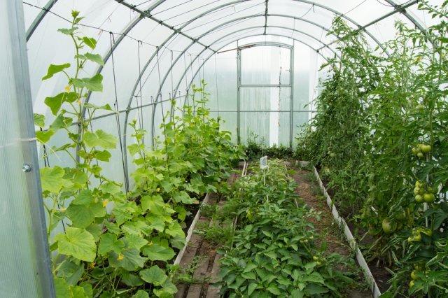 Можно ли посадить дыню рядом с кабачками: совместимость с другими культурами