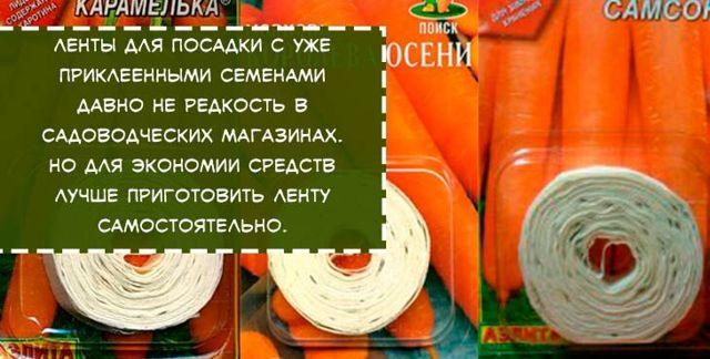 Как правильно и когда сажать морковь весной, как вырастить хороший урожай