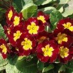 О многолетних цветах на могиле: какие цветы можно сажать на кладбище