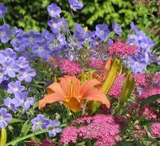О многолетних цветах для клумбы: схема посадки в ландшафтном дизайне