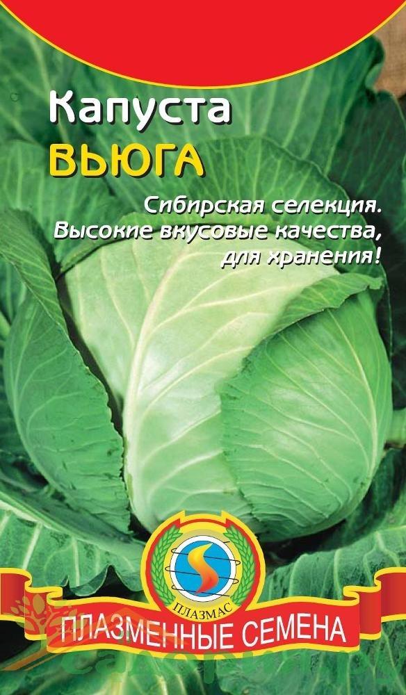 О капусте вьюга: описание и характеристика белокочанного сорта, особенности
