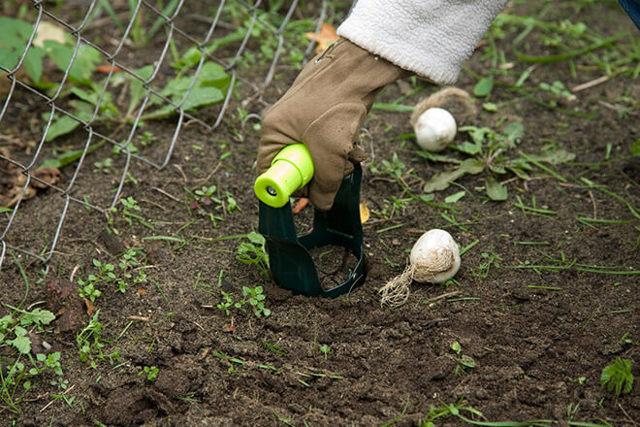 О пересаживании тюльпанов после цветения в открытом грунте (как рассаживать)