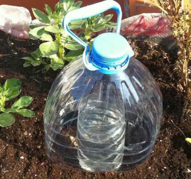 О капельном поливе из пластиковых бутылок своими руками: как сделать