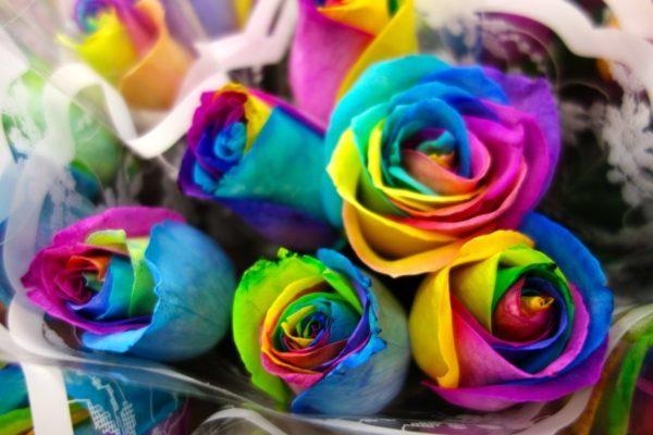 О покраске роз в домашних условиях: как красить белую розу в синий цвет