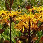 О долгоцветущих многолетниках для сада: самые красивые и влаголюбивые растения