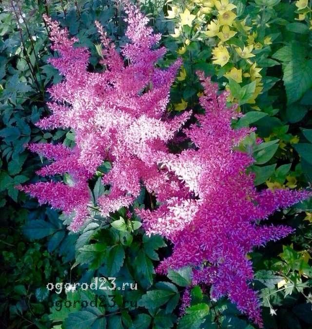О посадке многолетних цветов: какие можно сажать и когда лучше пересаживать