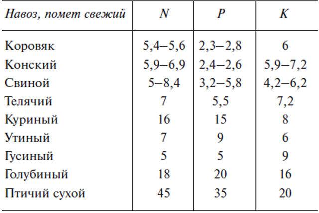 О землянике кимберли: описание и характеристики сорта, посадка, уход