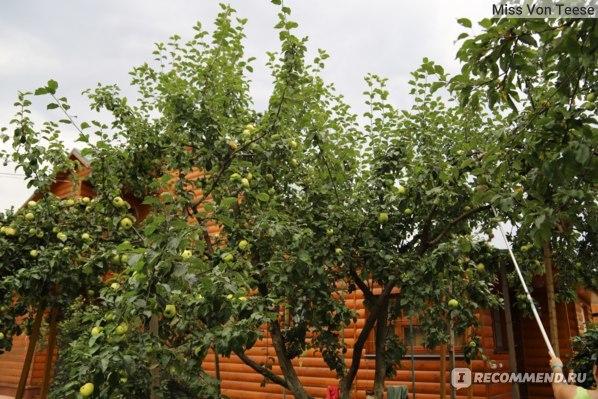 О плодосъемниках для яблок: плодосборник с телескопической ручкой и захватом