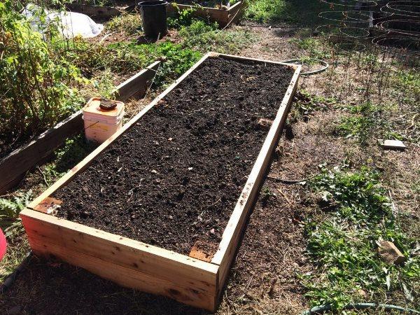 О методах выращивания крупного чеснока: секреты достижения хорошего урожая