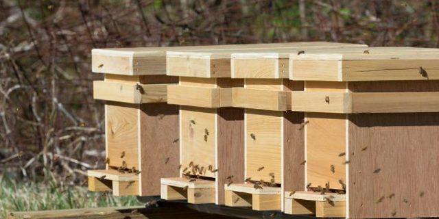 О поилке для пчел, дымарь, пчелиный домик, нуклеусы своими руками, чертежи