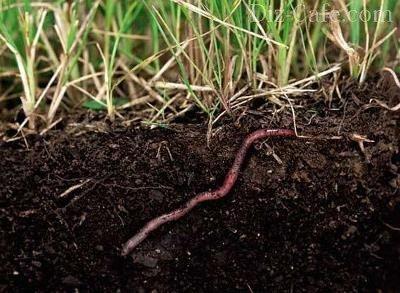 О вредителях и болезнях газона: описание и средства борьбы с заболеваниями