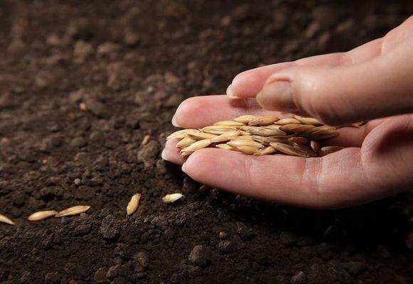 О парнике для кабачка: как можно собрать теплицу своими руками и вырастить культуру