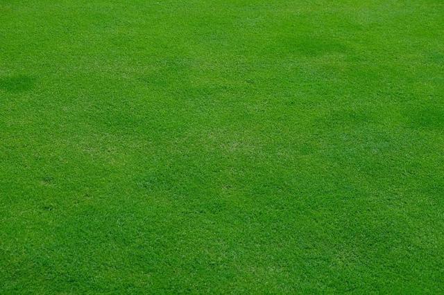 О партерном газоне: описание, характеристики, как посадить и выращивать