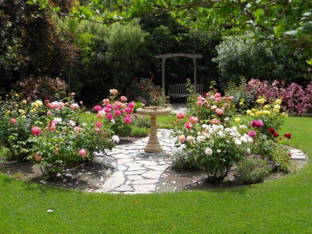 О розе свитнесс (sweetness): описание и характеристики чайно гибридной розы