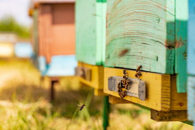 О разведении пчел в домашних условиях для начинающих, календарь пчеловода