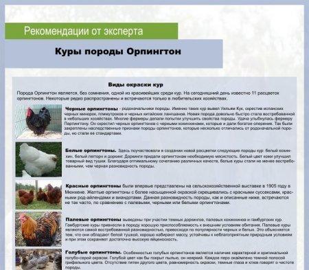 О курах венгерский великан: характеристики породы, разведение, уход