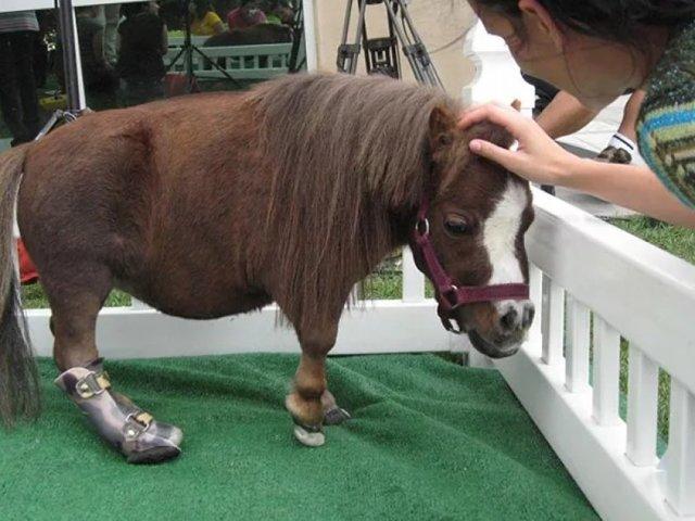 О мини лошадях: самые маленькие лошадки, миниатюрные породы мира