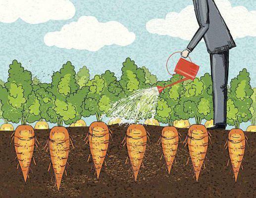 Как часто и правильно поливать морковь после посадки в открытом грунте