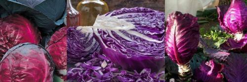 О листовой капусте: описание и характеристика, особенности выращивания