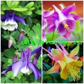 О посадке цветов в июле семенами в открытый грунт: когда сажать многолетники